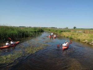 atrakcje biebrzańskiego parku narodowego, spływy kajakowe, biebrza spływy