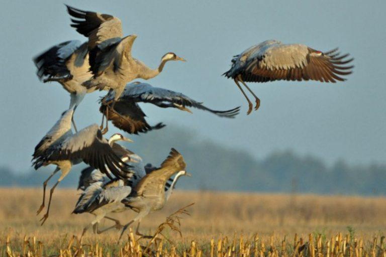 biebrza noclegi, biebrza, biebrza safari, biebrza kajaki, tratwy biebrza, biebrza zdjęcia, biebrza agroturystyka, biebrza ptactwo
